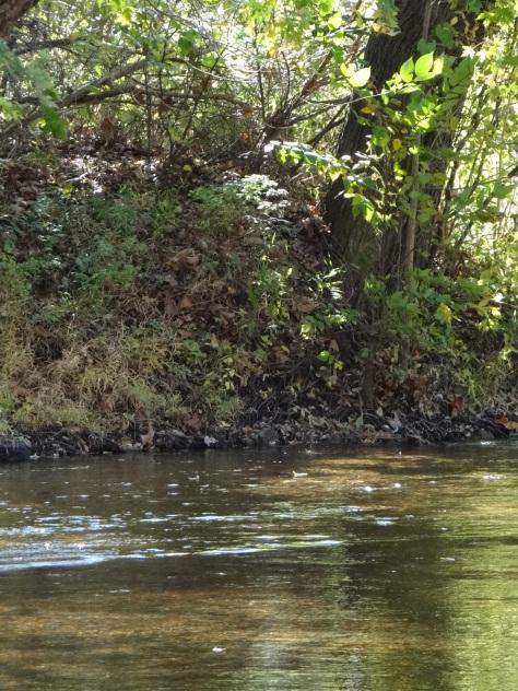 River in Leasburg, Missouri