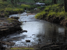My View of the Creek by Patrick Jones author The Wolf's Moon, The Linden Chronicles Book 1