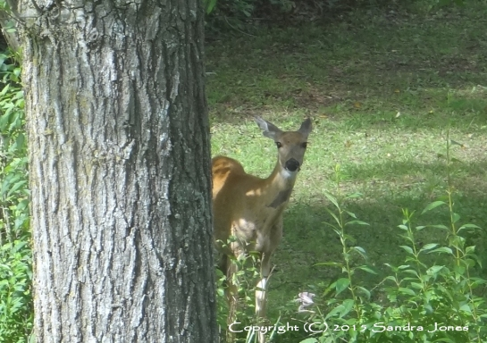 Mama Deer