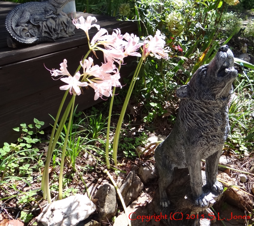 Wolf, Surprise Lillies, Naked Ladies, The Wolf's Moon, Patrick Jones, Audiobook